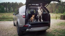 Ημέρα του Σκύλου: Αυτό το αυτοκίνητο μόλις κυκλοφόρησε χρήσιμα αξεσουάρ για τον τετράποδο φίλο σας (ακόμη και
