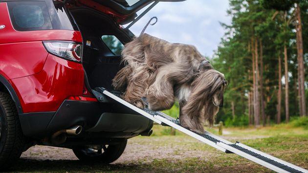 Ημέρα του Σκύλου: Αυτό το αυτοκίνητο μόλις κυκλοφόρησε χρήσιμα αξεσουάρ για τον τετράποδο φίλο σας (ακόμη...