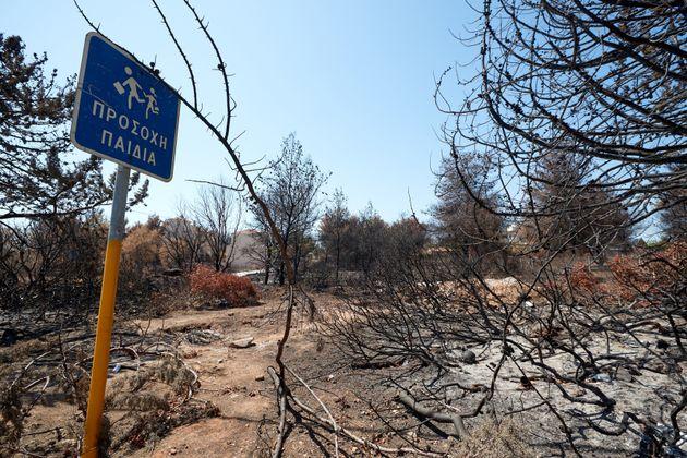 Πυρκαγιές στην Εύβοια και στο δήμο Τυρνάβου