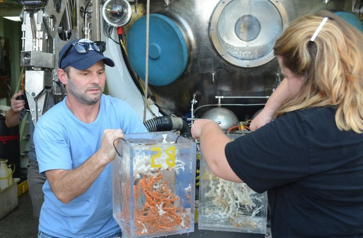 Deep-sea ecologist Erik Cordes, chief scientist of project Deep Search, unloads corals from a submersible aboard the re