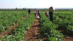 Choléra: inspection des produits agricoles, 49 cas confirmés par