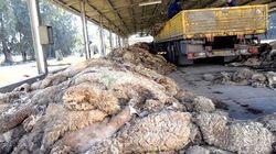 La filière textiles et cuirs sera dotée de plus de 4 millions de peaux dès