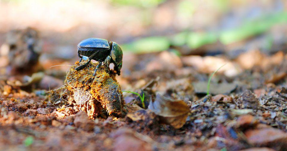 Käfer, Bienen, Schmetterlinge – Insekten fühlen sich in Städten wohl, sagt Biologe