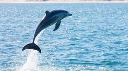 """Frankreich: Badegäste fürchten sich vor """"sexuell frustriertem"""" Delfin"""