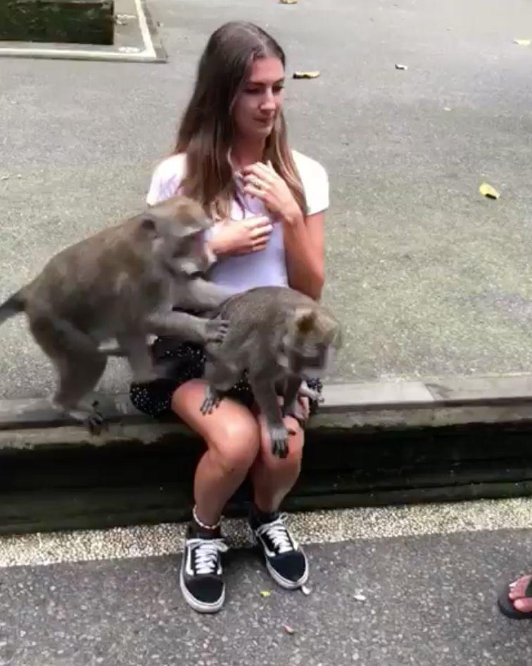 Touristin will mit einem Affen posieren – schnell bemerkt sie ihren
