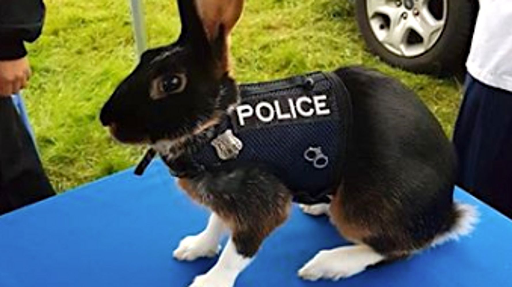 This Uniformed 'Police Rabbit' Is Making The Internet Hop With Joy ...