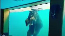 Des éléphants forcés de nager dans un aquarium en