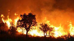 Incendies de forêts : plus de 1.500 ha parcourus par les feux de depuis