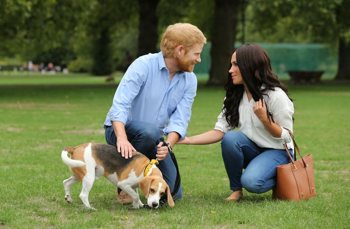 The fake Duke and Duchess of Sussex walk through London's Battersea Park. The REAL royals have reportedly adopted a dog toget