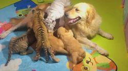 Απίστευτα κουτάβια: Τιγράκι, λιονταράκι και ύαινα με μαμά...