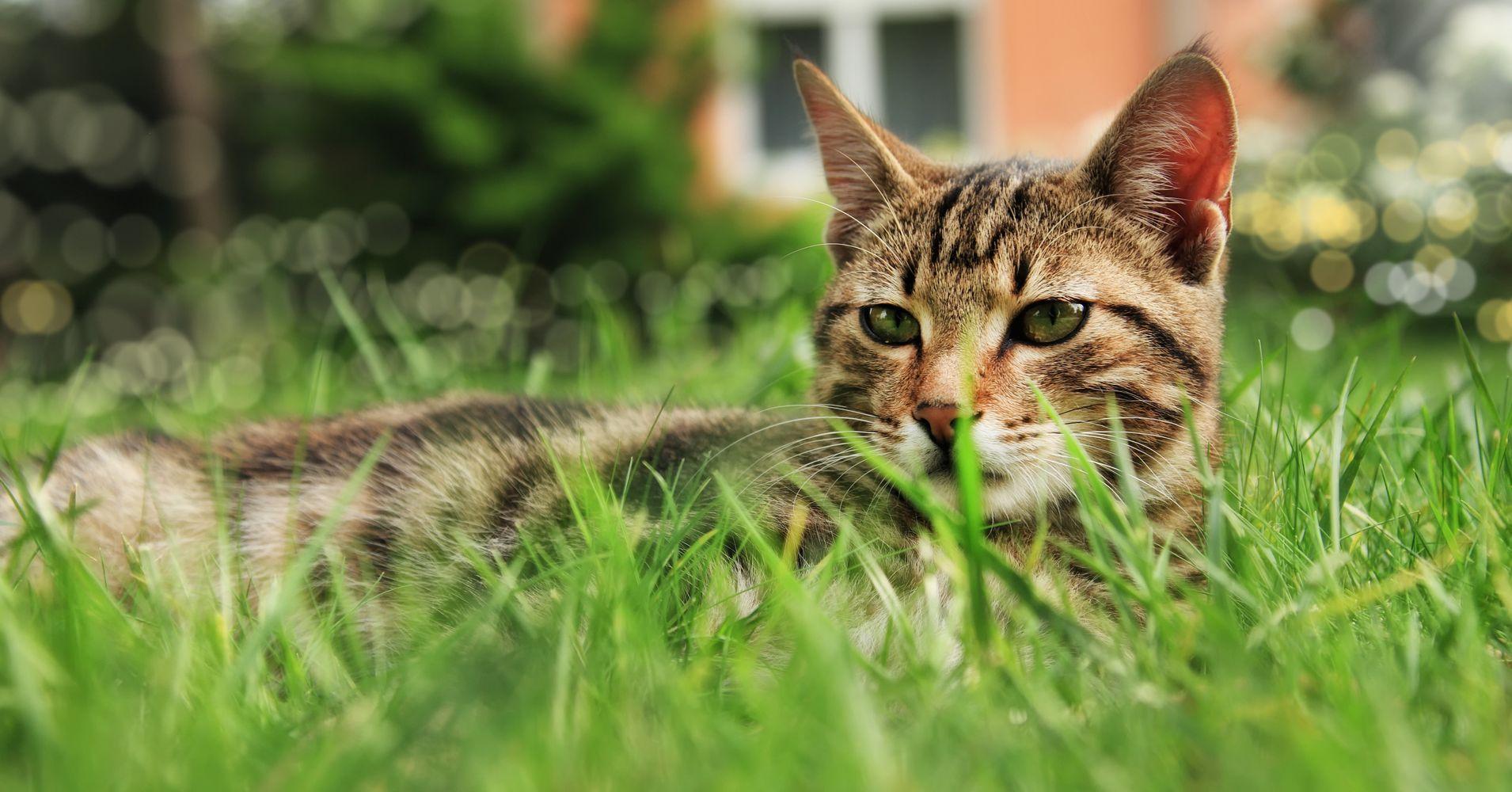 This New Zealand Village May Ban Cats | HuffPost