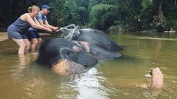 Why I will Never Ride an Elephant