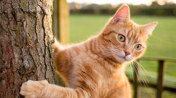 뉴질랜드의 한 지역이 고양이 개체수 줄이기에