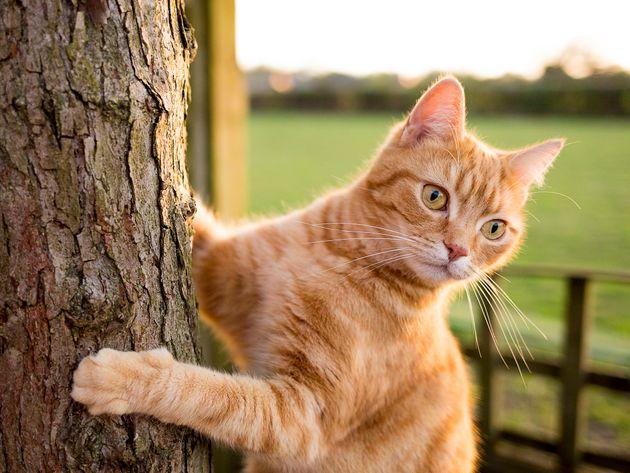뉴질랜드의 한 지역이 만든 동물보호계획은 고양이를 없애는