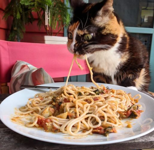 This Cat Is Coming For Your Spaghetti (And 4 Other Cute Animal Pictures To End The Week)