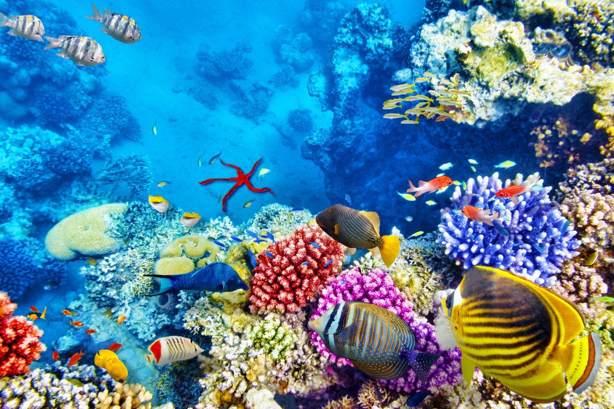 As Climate Change Ravages The Great Barrier Reef, Tourists Flock To Say