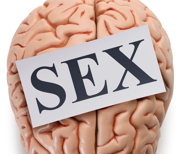 Regelmäßiger Sex regt das Zellenwachstum in der Gehirnregion Hippocampus an.