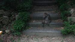 연신내에서 북한산 원숭이를
