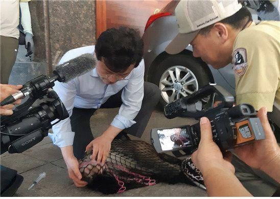 북한산 원숭이, 연신내서