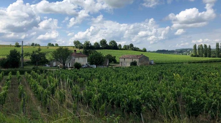 The vineyards outside Saint Emilion — one of the principal red wine areas of Bordeaux. Changes are coming here.