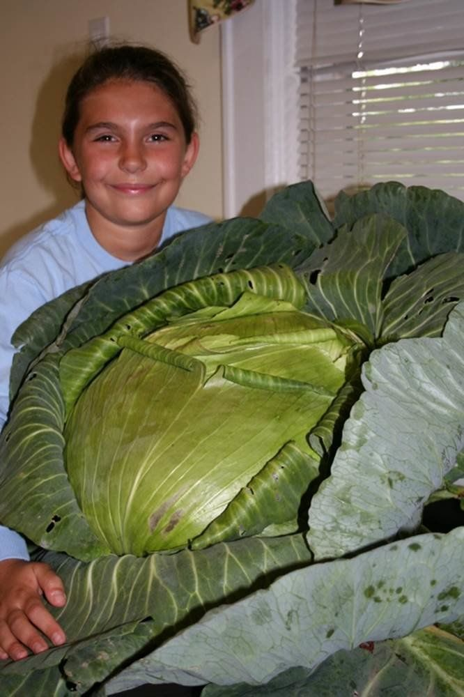 This Giant Cabbage Inspired A Nine-Year-Old To Feed Thousands Of People In Need