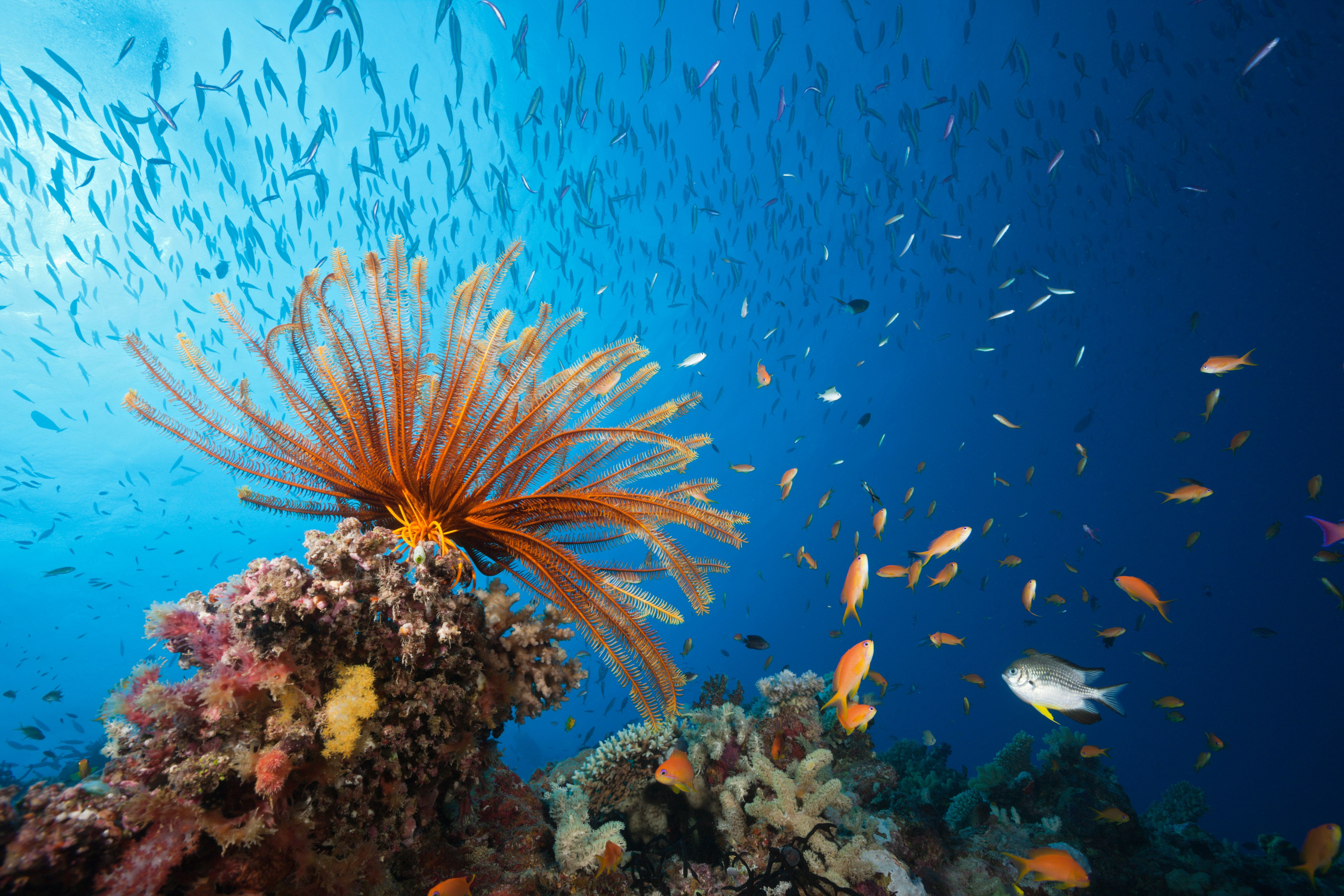 (GERMANY OUT)   Reef Scene with Crinoid and Fishes, Great Barrier Reef, Australia   (Photo by Reinhard Dirscherl\ullstein bild via Getty Images)