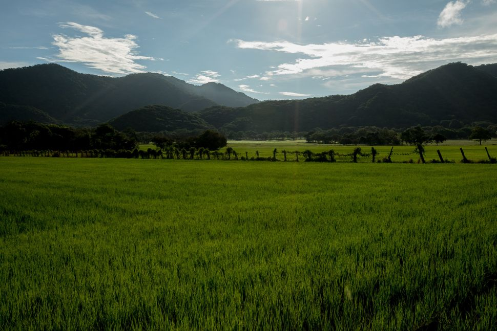 Rice field outside Nicoya, Guanacaste, Costa Rica