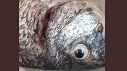 생선을 더 신선한 듯 보이게 하려고 가짜 눈을 붙였다가 발각된