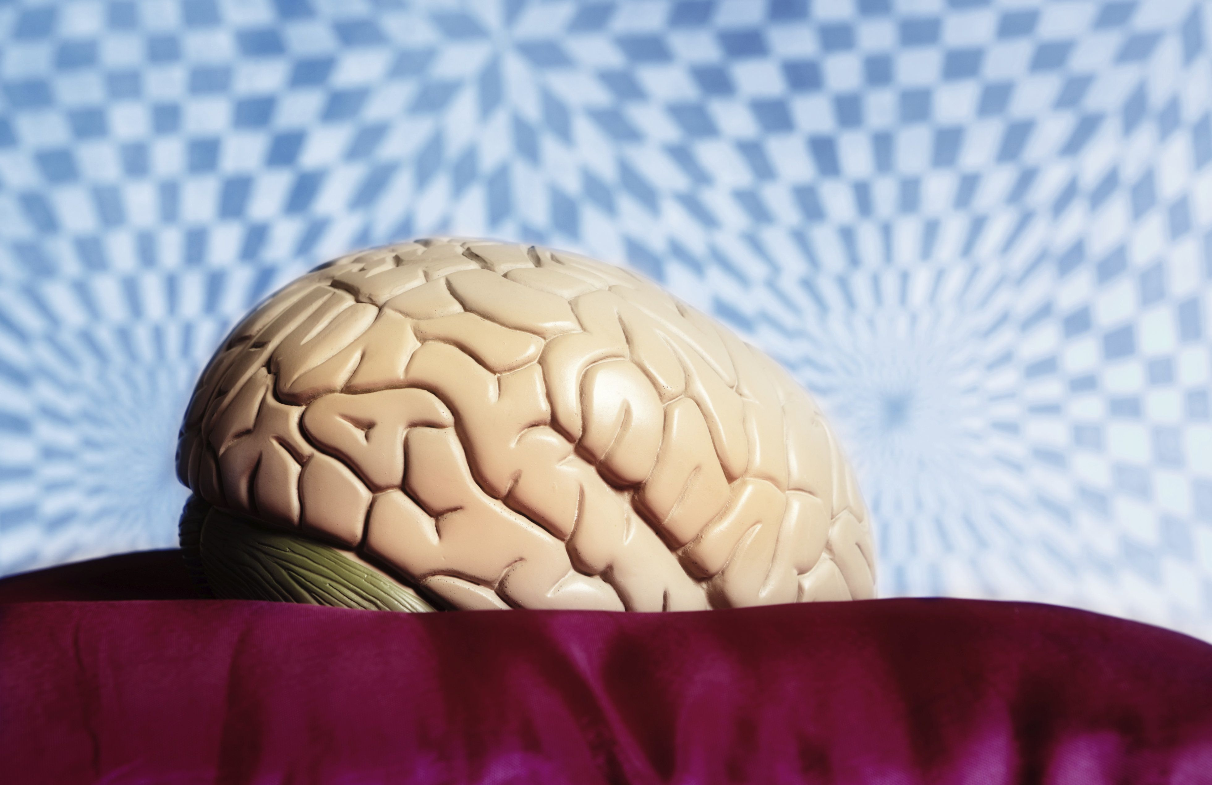 An anatomical model of the human brain sits in front of a  distorted, psychedelic looking background. Symbolizing psychedelic effects, most likely from psychotropic drugs such as LSD.