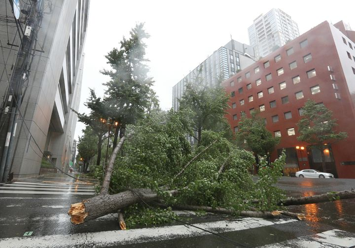 A fallen tree from strong winds lies on Midosuji street in central Osaka on September 4, 2018, as Typhoon Jebi made landfall around midday in southwestern Japan.