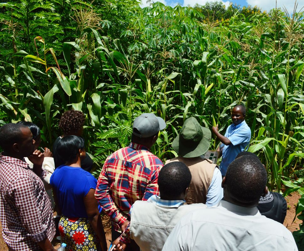 Never Ending Food's manager, Peter Kaniye, teaching a group of Malawian agriculture workers about permaculture.