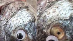 Au Koweït, des faux yeux sur les poissons pour qu'ils aient l'air plus