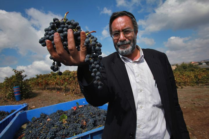 Haim Abergil, the Kashrut supervisor of the Dalton winery in northern Galilee in Israel, inspects just-harvested Merlot grapes in a vineyard. In order to qualify as kosher wine, the entire wine-making procedure -- both in the vineyards and in the winery -- must be overseen and certified by an authorized rabbi.
