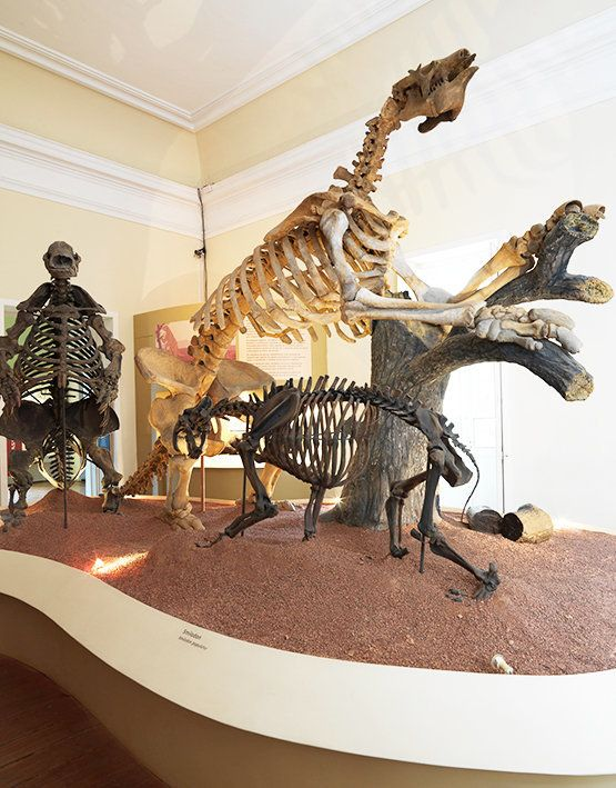 "The museum featured both authentic<a href=""http://www.museunacional.ufrj.br/dir/exposicoes/paleontologia/sertao_acervo.html"""