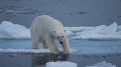 By 2030, We Will Pass The Point Where We Can Stop Runaway Climate