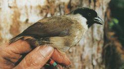 Good Job, Humans: 8 More Bird Species Confirmed