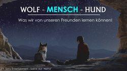 Wolf - Mensch -