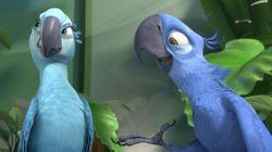 L'oiseau star du film
