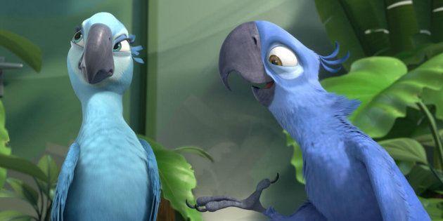 L'ara de Spix, l'oiseau star du film