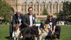 Border Collies Boomer And Corona Sweep To Victory In Westminster Dog