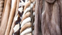 London Fashion Week To Ban Animal Fur From