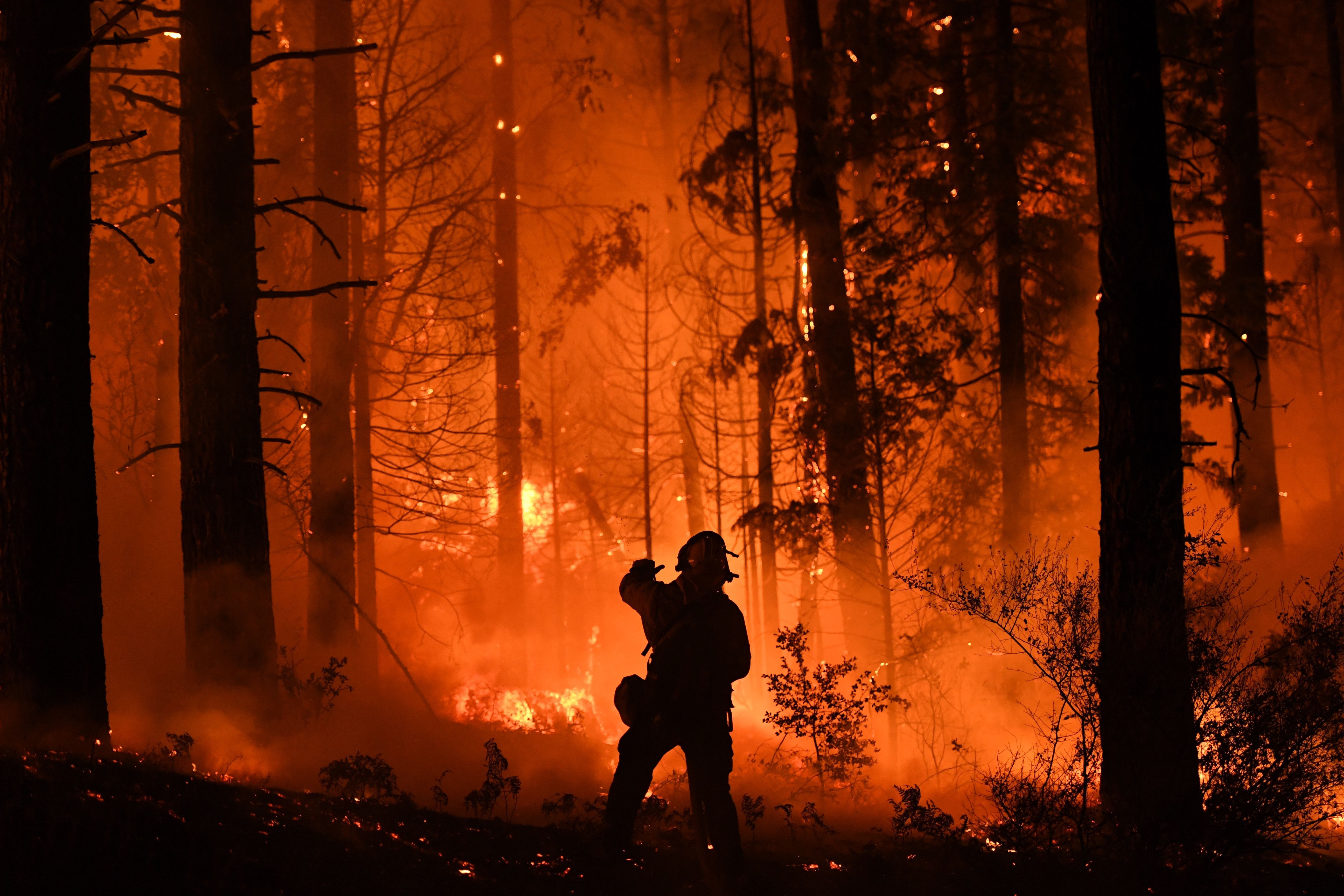 A firefighter tries to control a back burn as the Carr fire continues to spread towards the towns of Douglas City and Lewiston near Redding, California on July 31, 2018. - Two firefighters were killed fighting the blaze and three people, a 70 year old woman and her two great-grandchildren age four and five, perished when their Redding home was rapidly swallowed up by flames. (Photo by Mark RALSTON / AFP)        (Photo credit should read MARK RALSTON/AFP/Getty Images)
