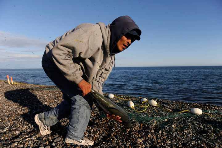Alaska Native Michael Dirks collects a silver salmon he caught while fishing in the Chukchi Sea in 2010. His Point Hope villa