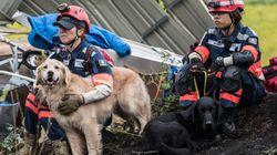 일본 홋카이도 지진의 사망자가 32명으로