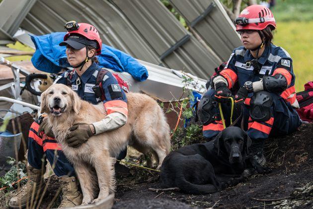 9월 7일 무너진 건물 잔해 근처에서 수색견과 구조대원이 대기 중이다.