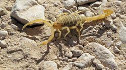 L'enquête sur le décès d'une jeune femme suite à une piqure de scorpion à Ouargla