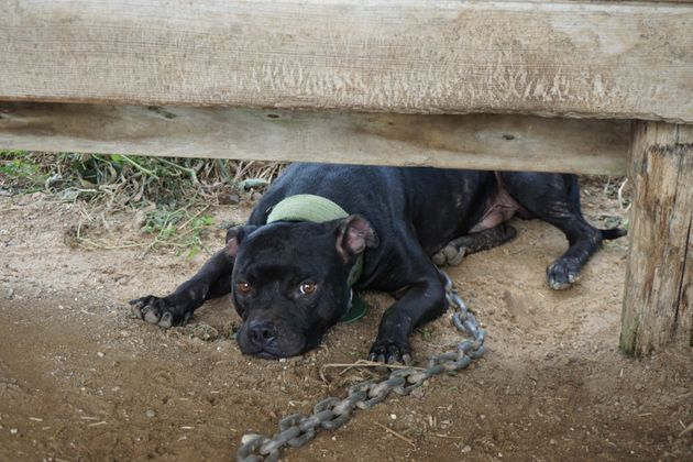 Dogs on the property were found tethered with heavy
