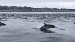 Αυτό το βίντεο με το κοπάδι εκατοντάδων δελφινιών είναι το ωραιότερο πράγμα που θα δείτε