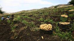 Souk Ahras: 6 cas d'irrigation de récoltes agricoles aux eaux usées dans la commune de