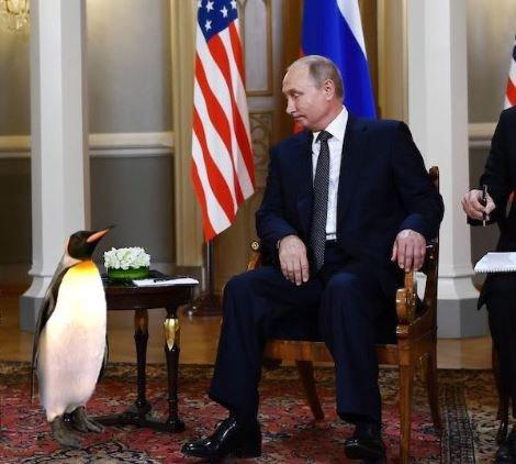 Πόσοι πιγκουίνοι χρειάζονται για να γίνει ένας Τραμπ;